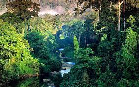 Amazónia 8