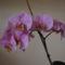 Boldog Húsvétot kívánok minden kedves Orchideakedvelőnek!