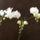Orchidea_1092449_9082_t