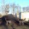 Püski, a kavicsbánya melletti vadaspark, 2015. január 06.-án