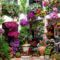 Virágos udvar-10385