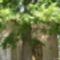 BAROSHÁZA Rózsafüzér Királynőjének kegyhelyenz-kapolnaoltar