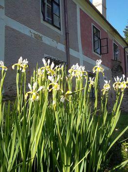Virágok a kastély oldalánál