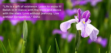 """""""Az élet a létezés ajándéka. Tanuld meg élvezni!..."""