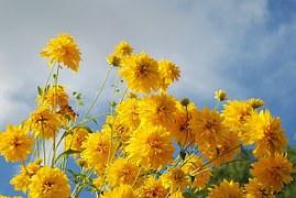 flower-256776__180