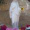 Szűz Mária szobor St.Margareth-ben