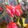 Kaktusz_1937156_7586_t