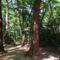 NYÍRSÉG sóstói erdő