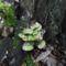 4. gombák