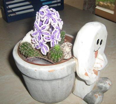 kivirágzott a kaktuszom:-)