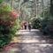 Rododendronokkal alátelepített erdeifenyves