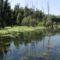 Kisbodak, az Öreg-szigeti belső tó a hullámtéri vízpótlórendszerben, 2015. augusztus 07.-én