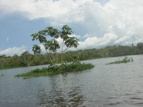 Új sziget születése az Amazonason