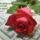 Aranyosi_ervin_meg_kene_tanulni_oszinten_szeretni_1943365_3958_t