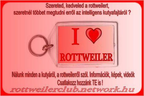 Szereted, kedveled a rottweilert ? ...