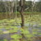 Victoria Regia, Amazonas állam, Brazília