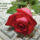 Aranyosi_ervin_meg_kene_tanulni_oszinten_szeretni_1944976_9326_t