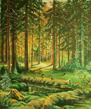 Fenyőerdő napsütésben