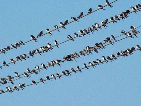 Fecske madár útra készen...:Dáma Lovag Erdős Anna