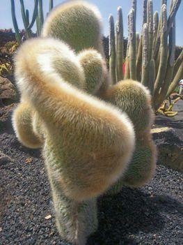 Kaktusz (2)