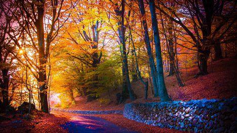 Őszi színek-0894
