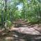 P1170366 Varbóc felé az erdőn át