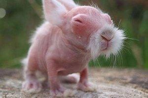 A bébi wombat akár egy kung-fu mester