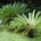 pálmagyerekek