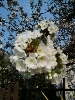 virágzik a gyümifa