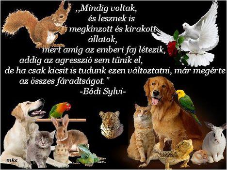 Ma ,október 4.az Állatok Világnapja