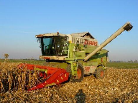 kukorica aratása