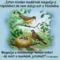 Minden madár