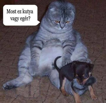 Most ez kutya vagy egér