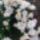 Marcsi virágai
