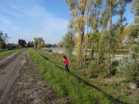 Mecsér, a Mosoni-Duna bal partján árvízvédelmi töltés a belterületi szakaszon, 2015. október 27.-én