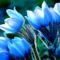 Virágok-0498