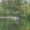 Csendélet a tónál