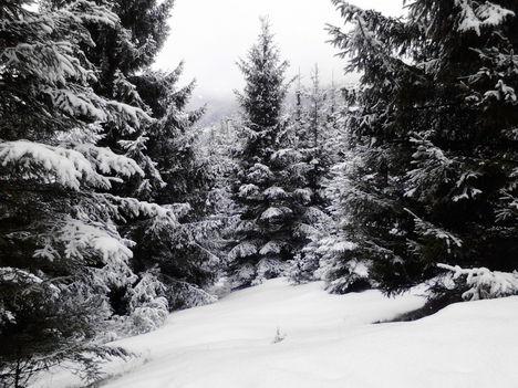 Mese az erdőről