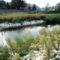 Mosoni-Duna az Aranyosszigeti halátjáró (szivárgó) csatorna melletti új Vizes élőhely, Mosonmamagyaróvár 2015 szeptember 21.-én