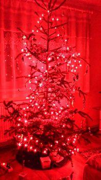 Az én Kincsem karácsony fája ..