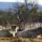 tehenészet a Füzéri úton