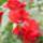 Sopronbanfalva-002_1968316_6239_t