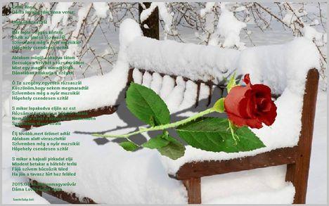 Utolsó rózsaszál...Dáma Lovag Erdős Anna