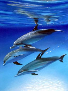 Delfinek 2