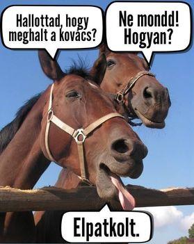 Kovács!