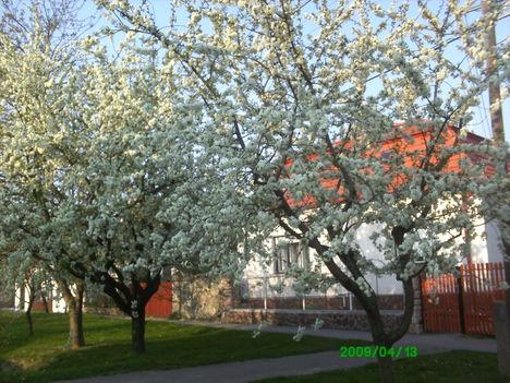 2009 tavasz B péterd
