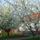 Bakonypéterd tavasz