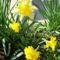 tavasz 10