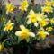 tavasz 12