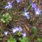 Tavasz első virágai 1